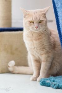 Katze Sam 2