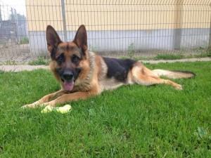 Duke groß (2)