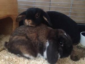 Schnuffel & Blacky