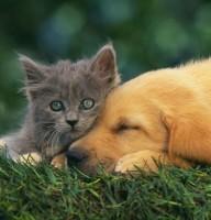 [bilder.4ever.eu] katze und hund 159317