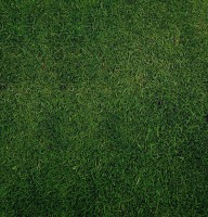 dark_green_grass_texture-other