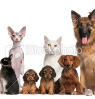 stock-photo-19615554-group-of-pets-dog-cat-bird-rabbit