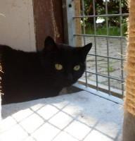 Cleo schwarz