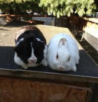 Leonie&Flecki