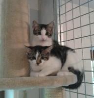 Alba&Joey