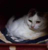 Katze Berta
