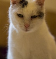 Katze Bobo