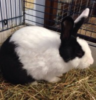Krümel Kaninchen