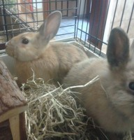 Rufus & Rusty