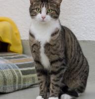 Katze Orlando