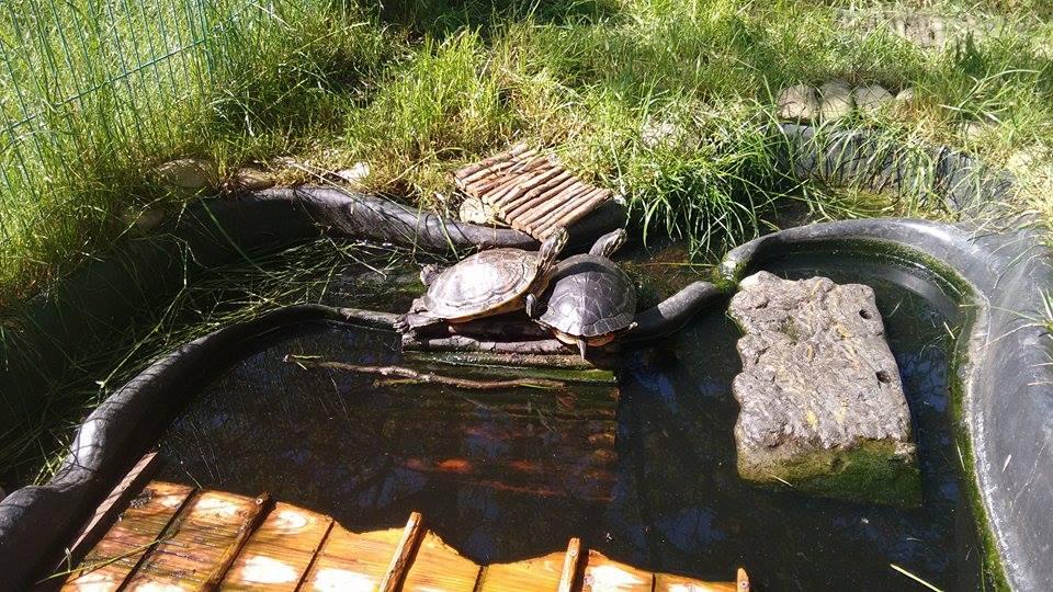 Schildkröten neu