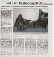 Artikel im BT Katzen
