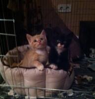 Maya & Timmy