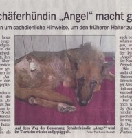 presse-angel1