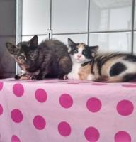 Lotte & Lisa