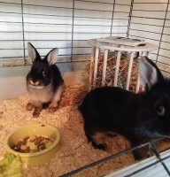 Banja & Betsy Foto