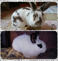 Fiona & Sweety