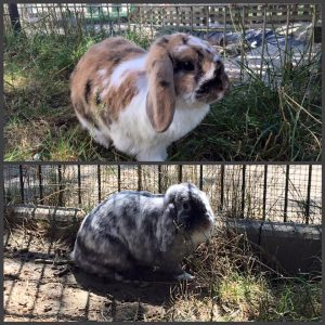Mimi u Nelio