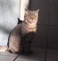 Trixi Katze