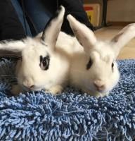 Marla & Milka