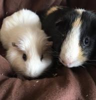 Orion und Muffin