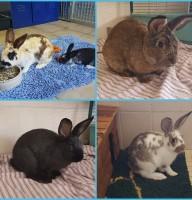 5 Kaninchen