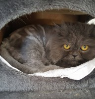 Kitty (2)