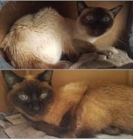 Willi & Winnie Foto