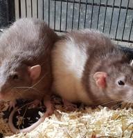 Dexter & Krümel Foto
