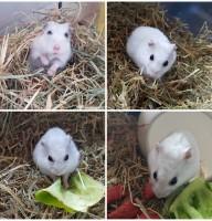 Hamster Foto