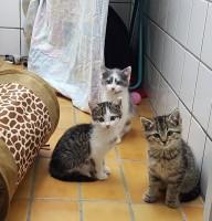 Katzenbabys Foto