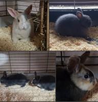 Kaninchen Babys Foto