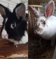 Cloe und Schnuffel