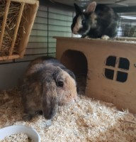 Brownie&Flecki Foto