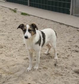 Tierschutzverein Rastatt