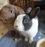 Zoe und Zeebra